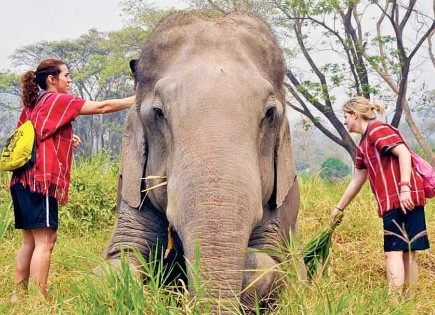 English teacher Lauren Brennan and math teacher Molly Williams scrub an elephant with reeds at a farm in northern Thailand. The teachers were part of a mission team