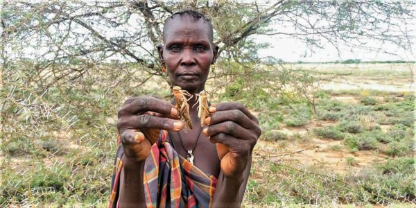 In Kenya's Turkana County, Jecinta Iperit Ekunyuk shows two of the billions of locusts that have ravaged East Africa.